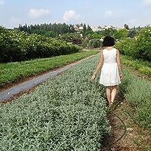 Herbal Tea Fields