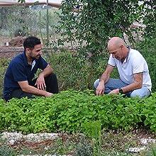 Growing Herbal Tea