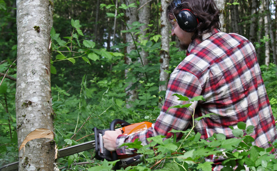 tree cutting, lumber, chainsaw, ear muffs, safety