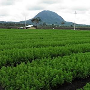 enzo liquid stevia drops farm