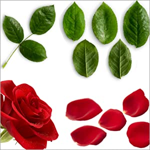 Select Fresh Rose Petals and Leaves for DeFaith 24K Gold Rose.
