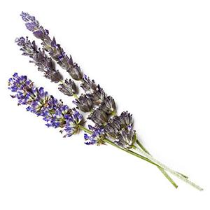 Essio-Shower-Kit-Lavender