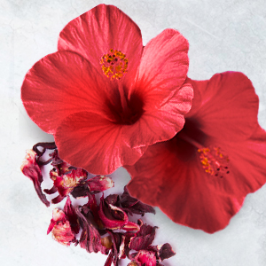 Red Hibiscus Flowers and Dried Petals