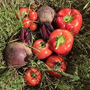 natural vegan organic ingredients