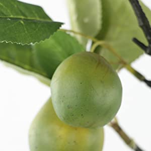 euro pears