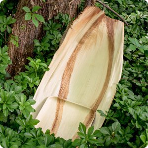 palm leaf plate next to palm leaf sheath in forest