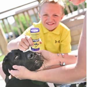 Apply Dog Sunscreen