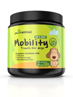 hip and joint supplements for dogs dog hip and joint supplement glucosamine chondroitin for dogs