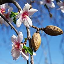 almond oil for skin, avocado oil, argan oil, rosehip oil, castor oil for skin, essential oils
