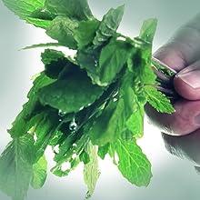 Puracy Natural Shampoo, Plant-based moisturizers